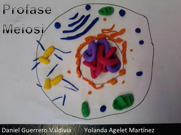 Daniel Guerrero Valdivia  Yolanda Agelet Martínez