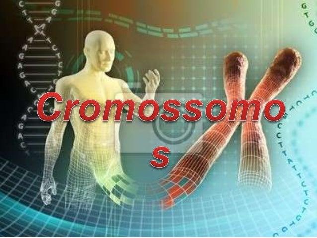 O que são os cromossomos? ∞ São longas sequências de DNA condensadas, sendo formados no período da interfase, antes da div...