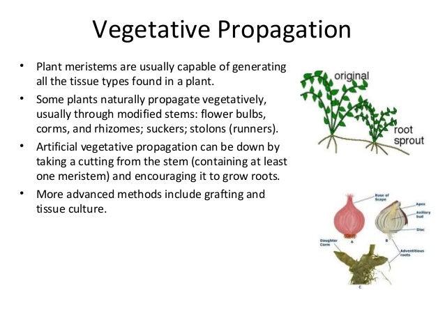 Define asexual propagation definition