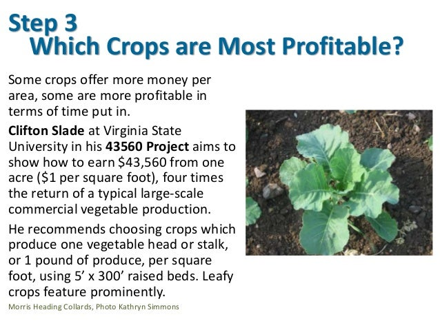 Which Crops are Most Profitable? Some crops offer more money per area, some are more profitable in terms of time put in. C...