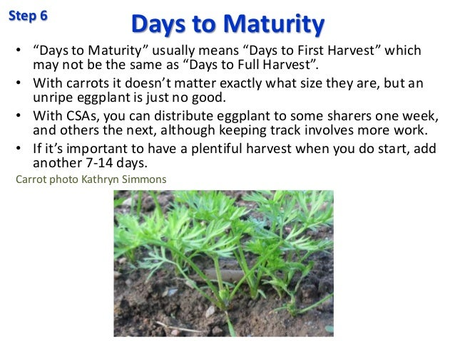 """Days to Maturity • """"Days to Maturity"""" usually means """"Days to First Harvest"""" which may not be the same as """"Days to Full Har..."""