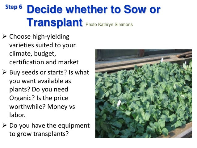 Decide whether to Sow or Transplant Photo Kathryn Simmons  Choose high-yielding varieties suited to your climate, budget,...