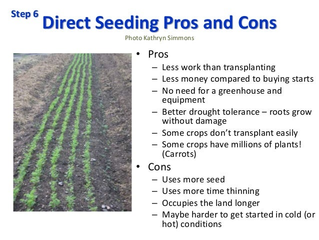Direct Seeding Pros and Cons Photo Kathryn Simmons • Pros – Less work than transplanting – Less money compared to buying s...