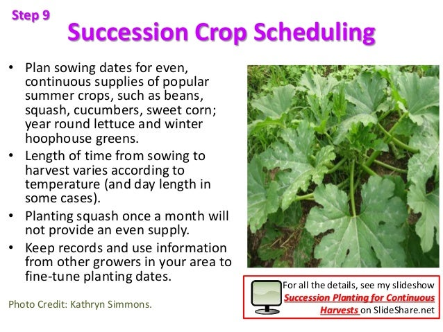 Succession Crop Scheduling • Plan sowing dates for even, continuous supplies of popular summer crops, such as beans, squas...