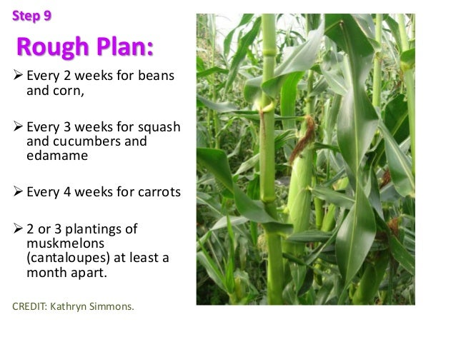 Rough Plan: Every 2 weeks for beans and corn, Every 3 weeks for squash and cucumbers and edamame Every 4 weeks for carr...