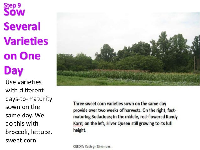 Sow Several Varieties on One Day Use varieties with different days-to-maturity sown on the same day. We do this with brocc...