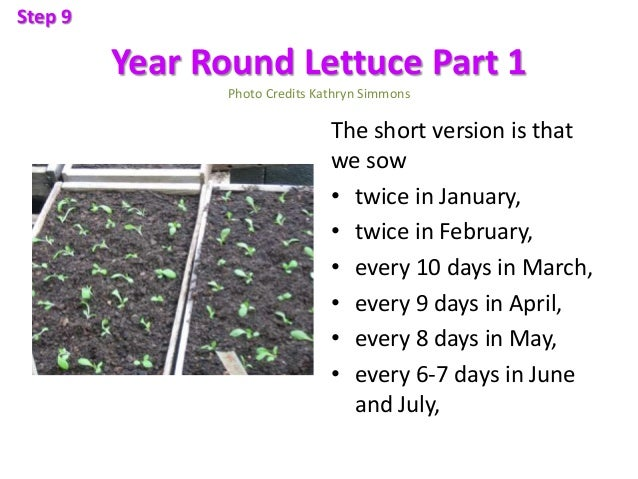 Year Round Lettuce Part 1 Photo Credits Kathryn Simmons The short version is that we sow • twice in January, • twice in Fe...