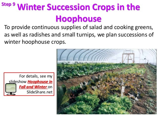 Winter Succession Crops in the Hoophouse To provide continuous supplies of salad and cooking greens, as well as radishes a...