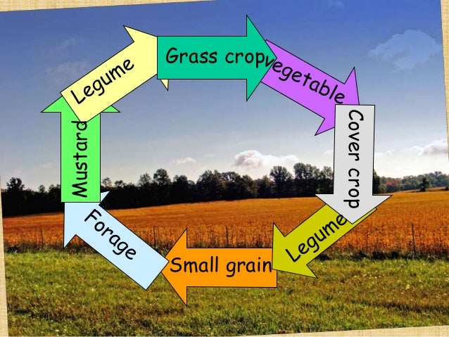 food and agriculture root crops essay The first genetically modified food approved for release  the united states department of agriculture  genetically modified crops genetically modified food.