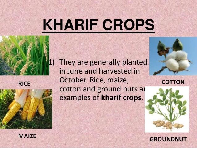 What are kharif crops? Quora.