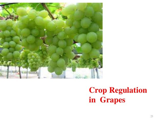 Crop regulation and off season fruit production
