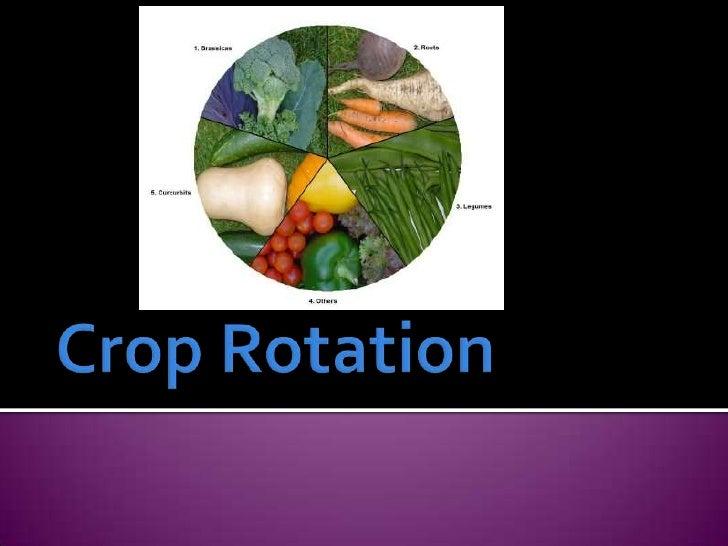 Crop Rotation<br />