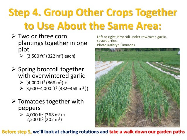 Step 4. Group Other Crops Together to Use About the Same Area:  Two or three corn plantings together in one plot  (3,500...