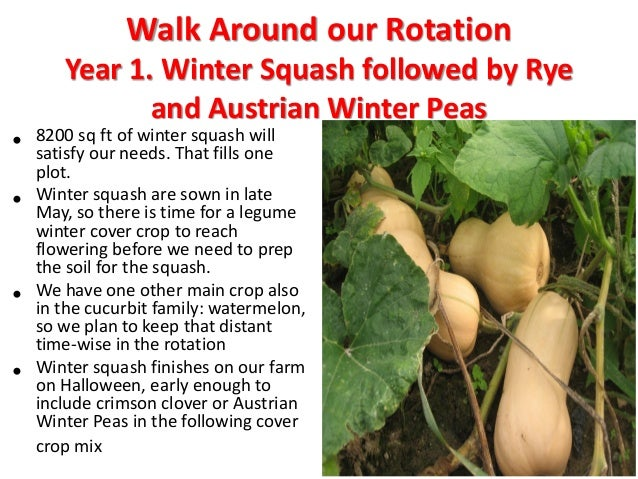 Year 3. Spring Potatoes Followed by Fall Brassicas • Potatoes are said to do well after corn, so we put our spring potatoe...