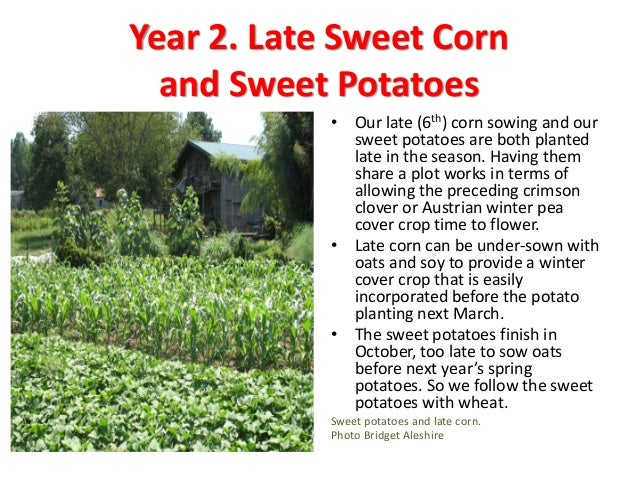 Year 4. All Year Green Fallow  The clover sown under the fall brassicas grows all next year, if all goes well.  We have ...