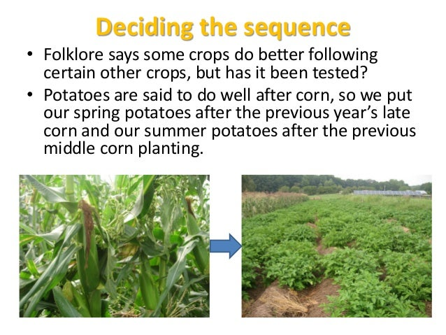 Late Corn undersown with oats March-planted Potatoes, followed by fall-planted broccoli & cabbage, undersown with clovers ...