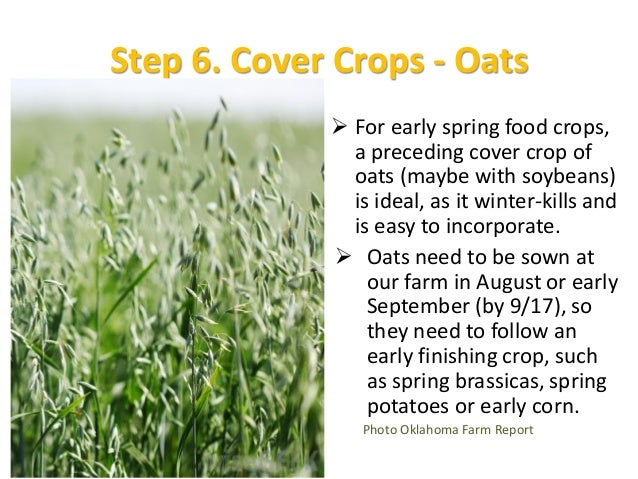 Leguminous Cover Crops To get best value from crimson clover, we need to wait until it flowers — mid-April at the very ea...