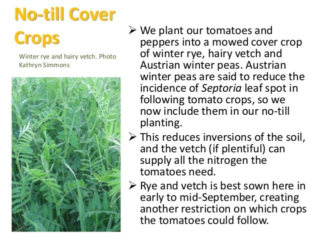 Late Fall Cover Crops Austrian Winter Peas can be sown as late as 11/8 here, so we add them to our later rye and wheat co...