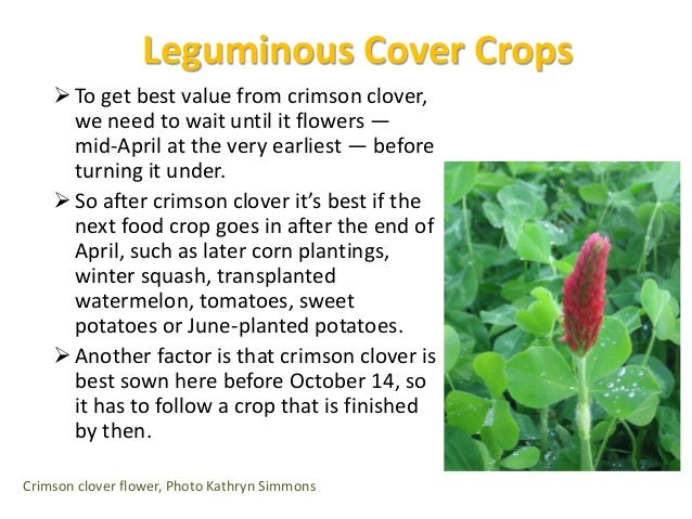 Popping in Summer Cover Crops  If we have a four week gap between crops in warm weather, we sow buckwheat.  If we have 6...