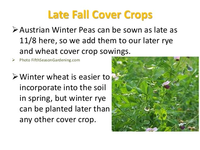 Cover Crop Opportunities  In spring, summer or fall, between one vegetable crop and a later one  In fall, after vegetabl...