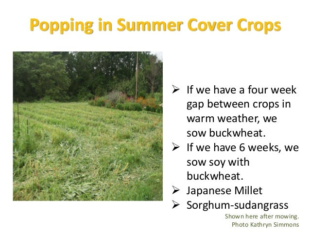 Fitting the Cover Crop With the Goal  Smothering weeds: sorghum-sudan, cereal rye, buckwheat, brassicas (we don't do bras...