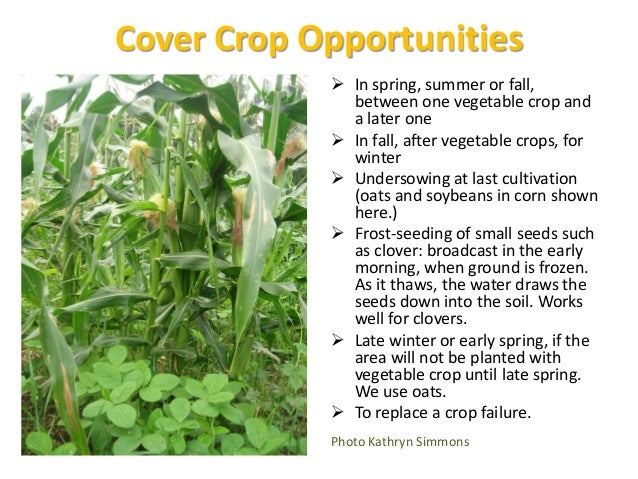 Incorporating Cover Crops into the Soil • If possible, grow to early bloom for max biomass, and with legumes, max nitrogen...