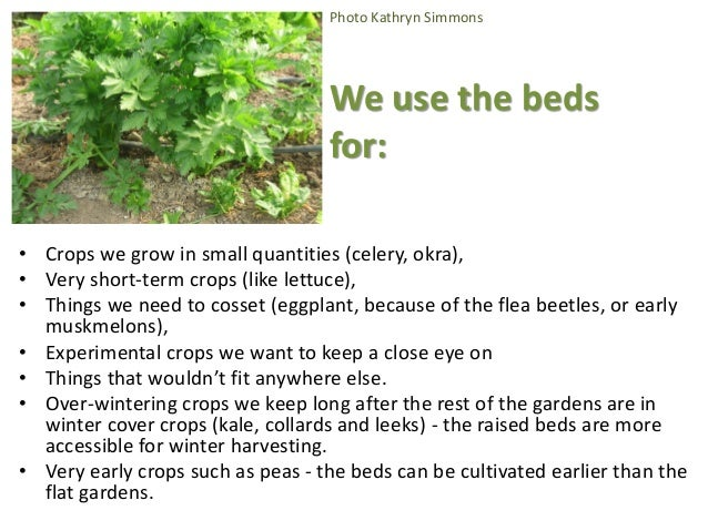 Photo Kathryn Simmons We use the beds for: • Crops we grow in small quantities (celery, okra), • Very short-term crops (li...