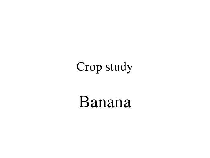 Crop study<br />Banana<br />