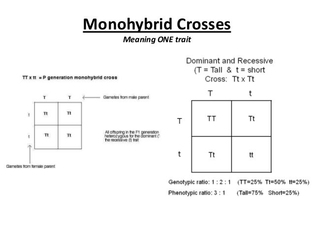 Crosses and pedigrees