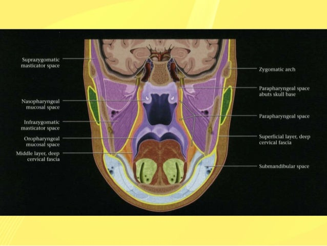 Cross sectional anatomy of the neck