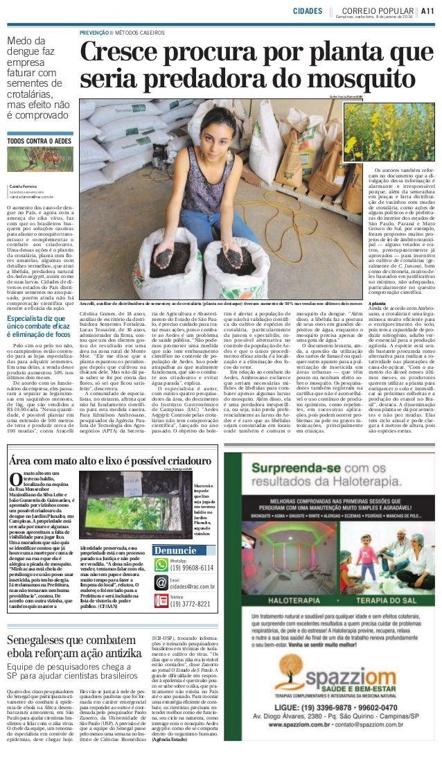 Cresce procura por planta que seria predadora do mosquito PREVENÇÃO ||| MÉTODOS CASEIROS Camila Ferreira DA AGÊNCIA ANHANG...
