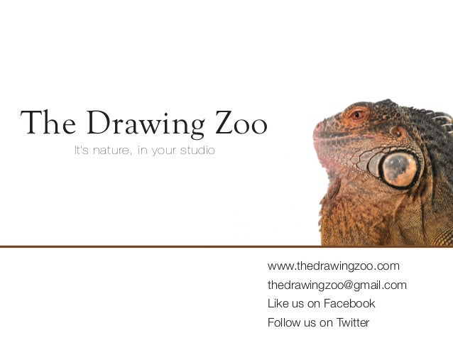 The Drawing Zoo   It's nature, in your bengkel                                 www.thedrawingzoo.com                       ...