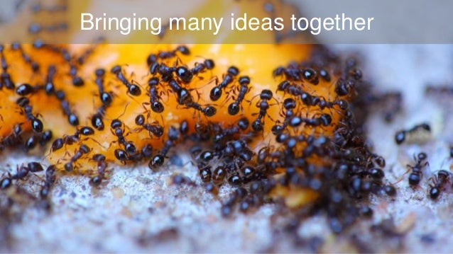 Participatory strategyFlickr credit: tedeytan