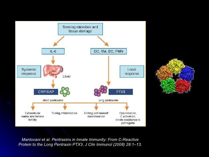 An lisis de sangre prote na C reactiva