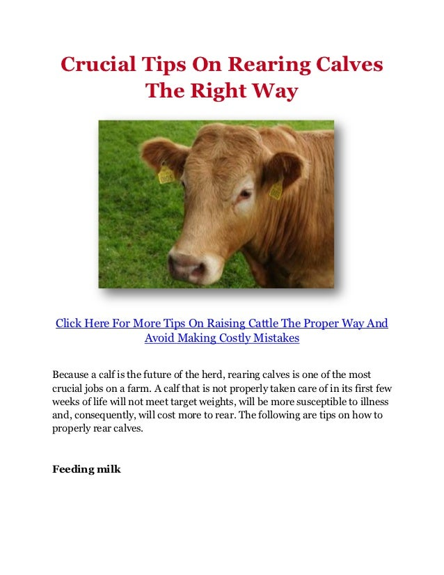 Crucial Tips On Rearing Calves          The Right WayClick Here For More Tips On Raising Cattle The Proper Way And        ...