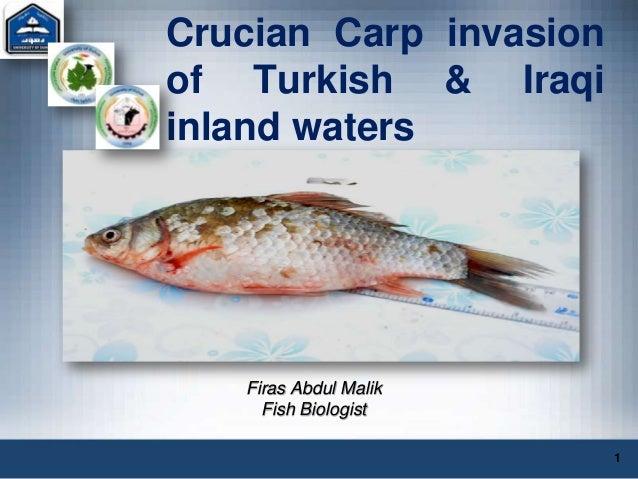 Crucian Carp invasionof Turkish & Iraqiinland watersFiras Abdul MalikFish Biologist1