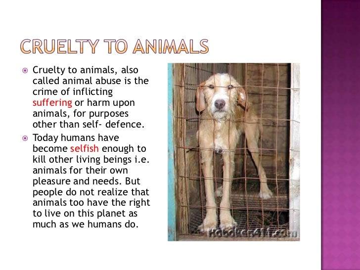 persuasive essay animal cruelty