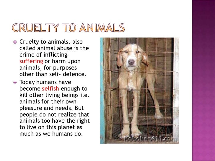 cruelty towards animals essay The treatment towards animals in the circus is unethical  - information about the topic animal abuse cruelty to animals, also called animal abuse or animal neglect, is the human infliction of suffering or harm upon non-human animals, for purposes other than self-defense or survival  - article evaluative critique in this short essay.