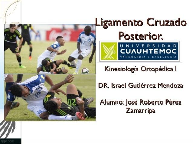 Ligamento CruzadoLigamento Cruzado Posterior.Posterior. Kinesiología Ortopédica IKinesiología Ortopédica I DR. Israel Guti...