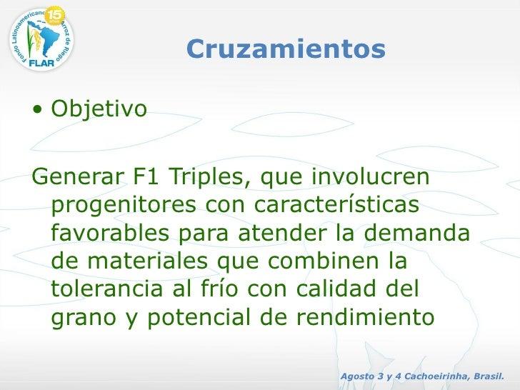 Cruzamientos <ul><li>Objetivo </li></ul><ul><li>Generar F1 Triples, que involucren progenitores con características favora...