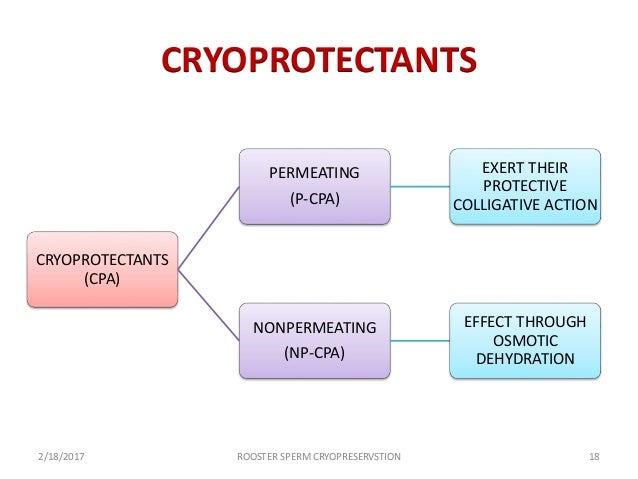 penetrating cryoprotectants across cell membranes The cell shrinks necessitating the membrane to contract  even intracellular  cryoprotectants which remain in the cells after  eventually, as more and more  cpas penetrate into the cell, the outflow of interstitial fluid through.