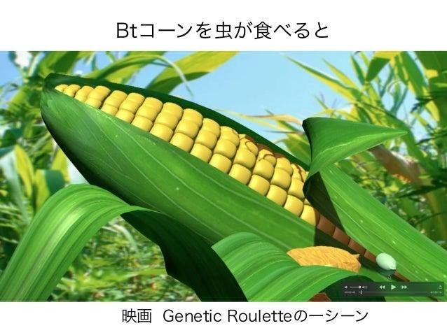 Btコーンを虫が食べると 映画 Genetic Rouletteの一シーン