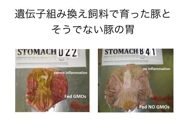 遺伝子組み換え飼料で育った豚と そうでない豚の胃