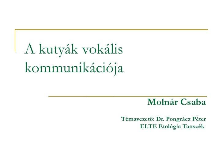 A kutyák vokális kommunikációja <ul><ul><li>Molnár Csaba </li></ul></ul><ul><ul><li>Témavezető: Dr. Pongrácz Péter </li></...