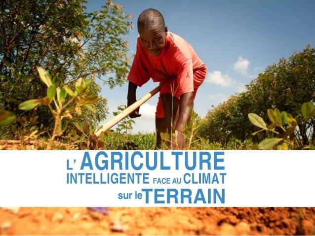 L'Agriculture iinntteelllliiggeennttee ffaaccee aauu cclliimmaatt est une  approche à la réalisation du développement agri...