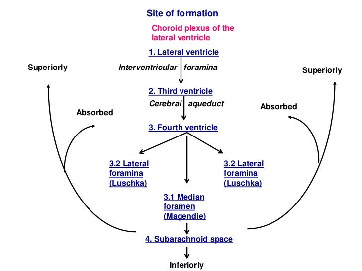 Image result for formation of csf fluid
