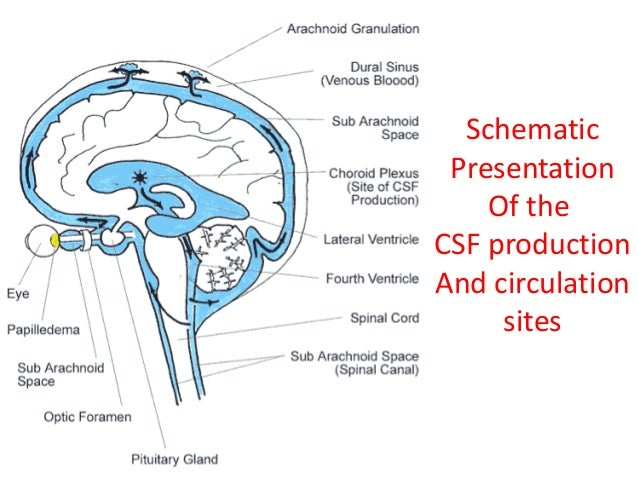Pure Hypercholesterolemia furthermore Approach To Head Injured Patient besides Imaging Monitoring And Imaging Part 3 moreover Csf Seminar as well Minimal Invasive Surgery Cranioplasty. on blood flow of brain