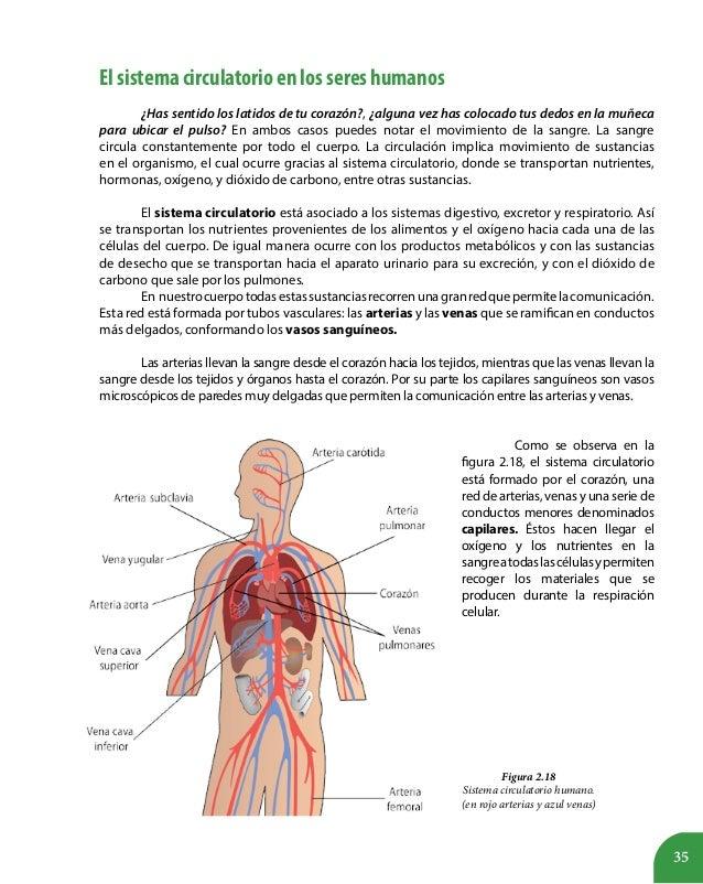 Lujoso Diagrama De Marcado Del Sistema Digestivo Humano Patrón ...