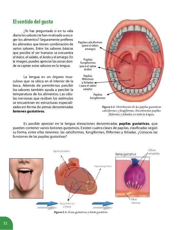 Atractivo Imagen De La Lengua Con Papilas Gustativas Bosquejo ...
