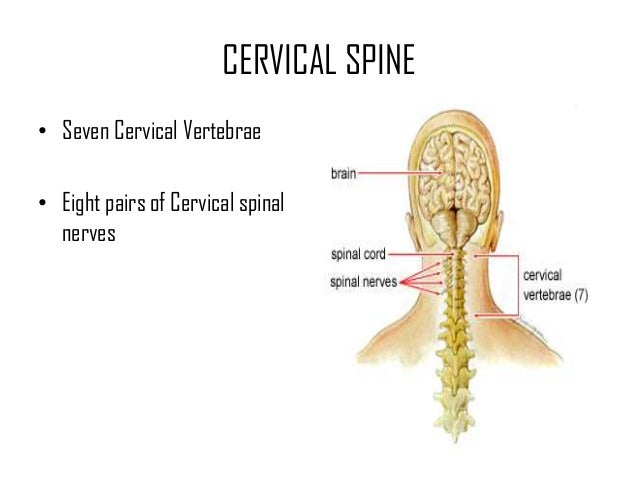 Cervical Fractures And Cervical Spine Injuries Drkk